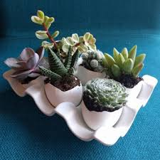 amazon succulents clement nursery 60 photos u0026 65 reviews nurseries u0026 gardening