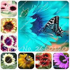 edible flowers for sale online get cheap edible flowers aliexpress alibaba
