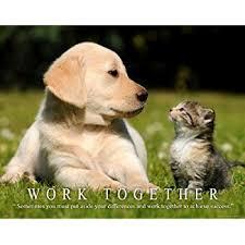 amazon cat motivational poster art print 11x14 kitten puppy