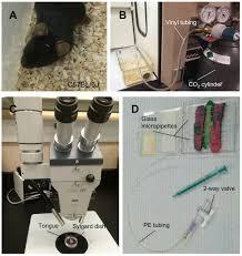 60 pdf accumet xl15 ph meter manual 100 causes correlates