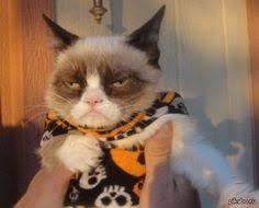bonita mirada de un gato animales pinterest un