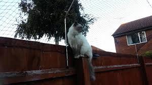 Home Decor Outlet Richmond Va Filestray Red Cat Climbing Fence 1 Jpg Wikimedia Commons Loversiq