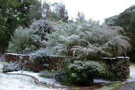 australia native plants frost and drought hardy australian native plant nursery