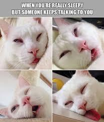 Tired Meme Face - funny cat tired meme funny pics story