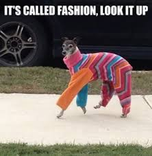 Fashion Meme - all the best fashion memes fashion beauty hunger tv