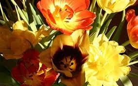 single sun flower wallpapers single sun flowers wallpaper