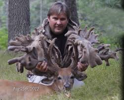 double main beam whitetail deer outdoorsman com big game