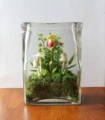 make an orchid terrarium in 5 minutes small garden ideas