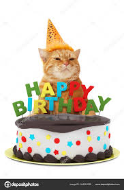 funny cat with happy birthday cake wearing a party hat isolated