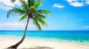 tropical palm tree wallpaper awesome tropical palm tree