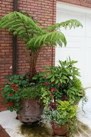 best australian native plants for pots and containers gardening 148 best plants for terraces images on pinterest landscaping
