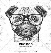 pug images illustrations vectors pug stock photos u0026 images