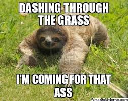 Sloth Meme Images - 56 best dirty sloth images on pinterest sloth sloths and funny
