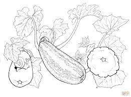 squash coloring page free printable coloring pages