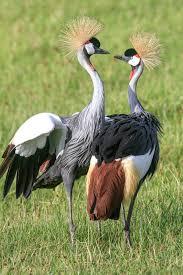 tanzania photography tours serengeti wildlife photo safaris
