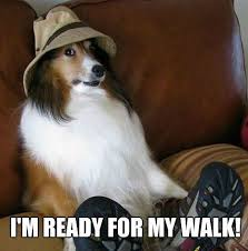 Meme Dog - 11 marvelous meme monday dog memes petcentric by purina