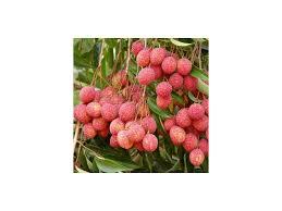 lychee fruit lychee seed litchi chinensis seeds litschi litsch