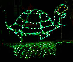 free images green holiday darkness turtle invertebrate