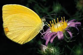 plant biology britannica com