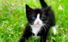 cat hd wallpaper ahdzbook wp e journal
