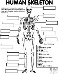 Human Skeleton Coloring Page human skeleton coloring page crayola