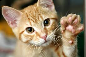 how to train a cat to do 5 life changing things reader u0027s digest