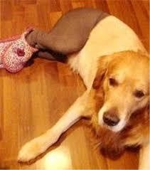 Pantyhose Meme - dogs wearing pantyhose meme 2 coolness pinterest dog