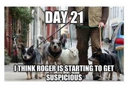australian shepherd meme 45 funny dog memes dogtime