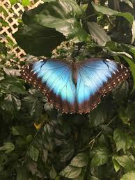 magic wings butterfly conservatory home