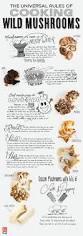 59 best foraging mushrooms images on pinterest wild mushrooms