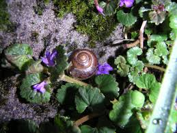 all about land snails welcome wildlife