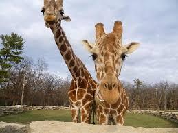 Wisconsin wildlife tours images Timbavati wildlife park wisconsin dells top tips before you go jpg