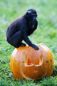 Country Halloween Originated In by 65 Best Halloween In Ireland Images On Pinterest Halloween Ideas