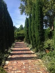 garden with brick walkway and italian cypress trees garden with