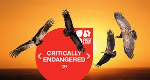 listbirds news birdlife