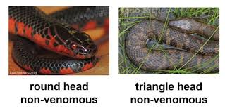 How To Find Snakes In Your Backyard Id Your Snake Kentucky Snake Identification