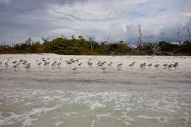 beach resort lovers key resort ft myers beach fl