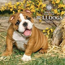 bulldog dogbreed gifts com bulldog calendars
