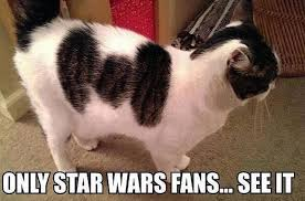 Star Wars Cat Meme - humor the star wars meme thread page 14 the cantina