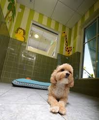 Canine Creature Comforts Creature Comforts Benefit Your Bottom Line