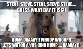 Hump Day Camel Meme - list of synonyms and antonyms of the word happy hump day camel