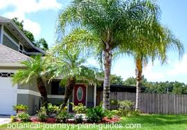 Front Yard Tree Landscaping Ideas Landscaping Ideas Front Yard Palm Trees Pdf
