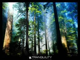 forests green jungle tranquility tree forest hd live wallpaper