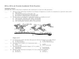 section  rna and protein synthesis worksheet answers  with dna rna amp protein synthesis web practice answer section from guillermotullcom