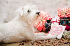 barking up the right tree the best pet presents ovrs