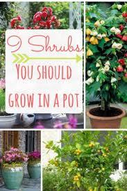 best 25 organic container gardening ideas on pinterest growing