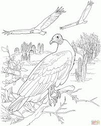 vulture attacks from the sky download coloring page animal