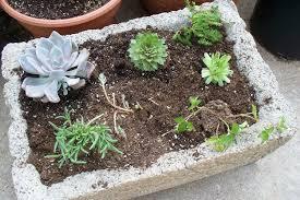plant a miniature rock garden gardening in a hypertufa