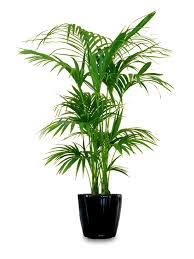 Best Plant For Indoor Low Light 18 Best Large Indoor Plants For Home Large Indoor Plants Indoor