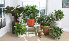 houseplants green air filters and bright accents for creative